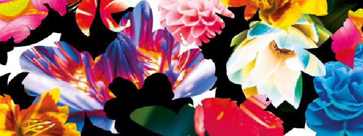 RENDEZ-VOUS AUX JARDINS, week-end du 2 et 3 juin sur les cinq sites