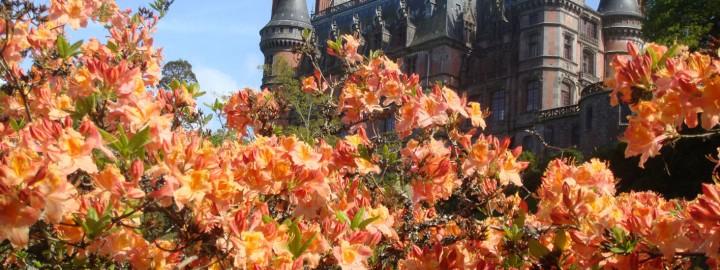 Trevarez en Rhododendron